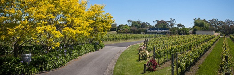 Sunday Drive to the Peninsula and Lunch at Veraison Restaurant April 26