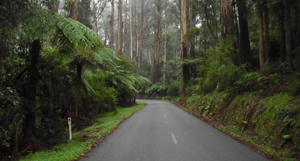 Sunday Morning Drive to Toolangi 24th June