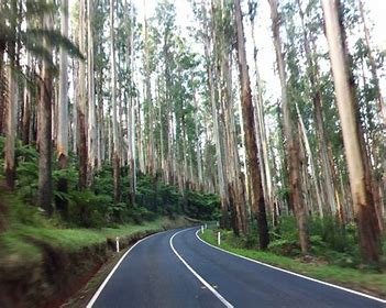 Sunday Morning Drive to Yarra Ranges (2 drives)